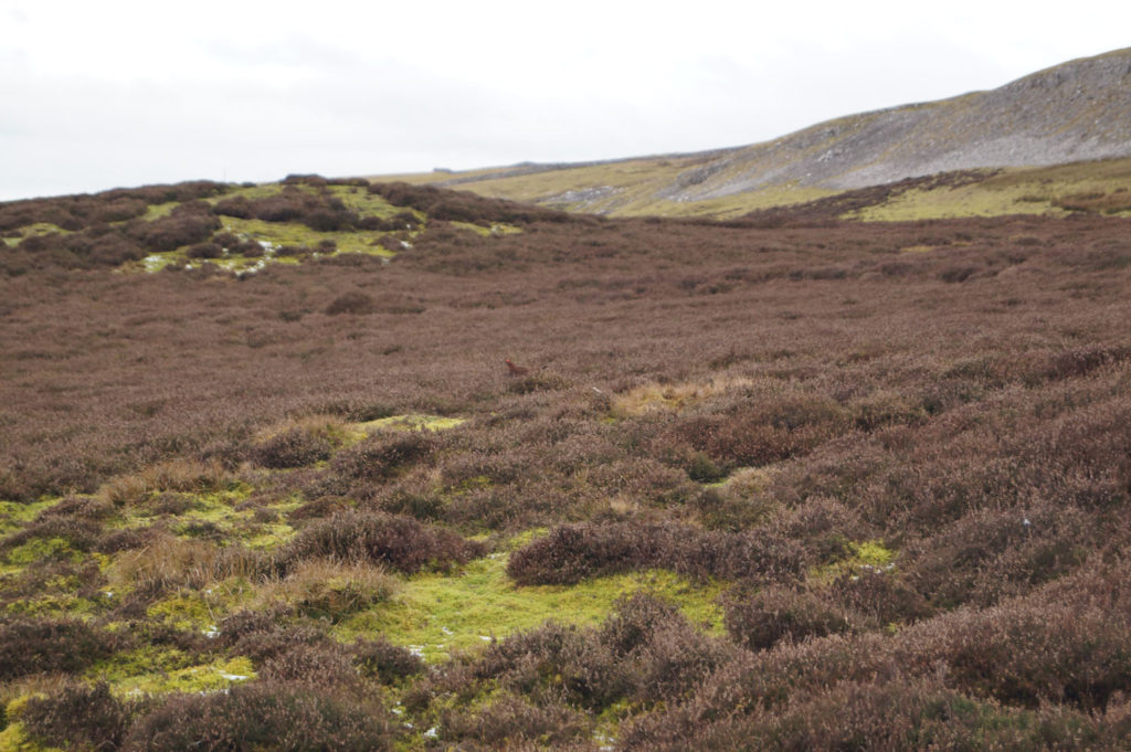 Heather moorland at Bolton